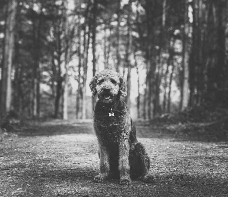 animal photography pet photographer staffordshire   Jon Thorne photography